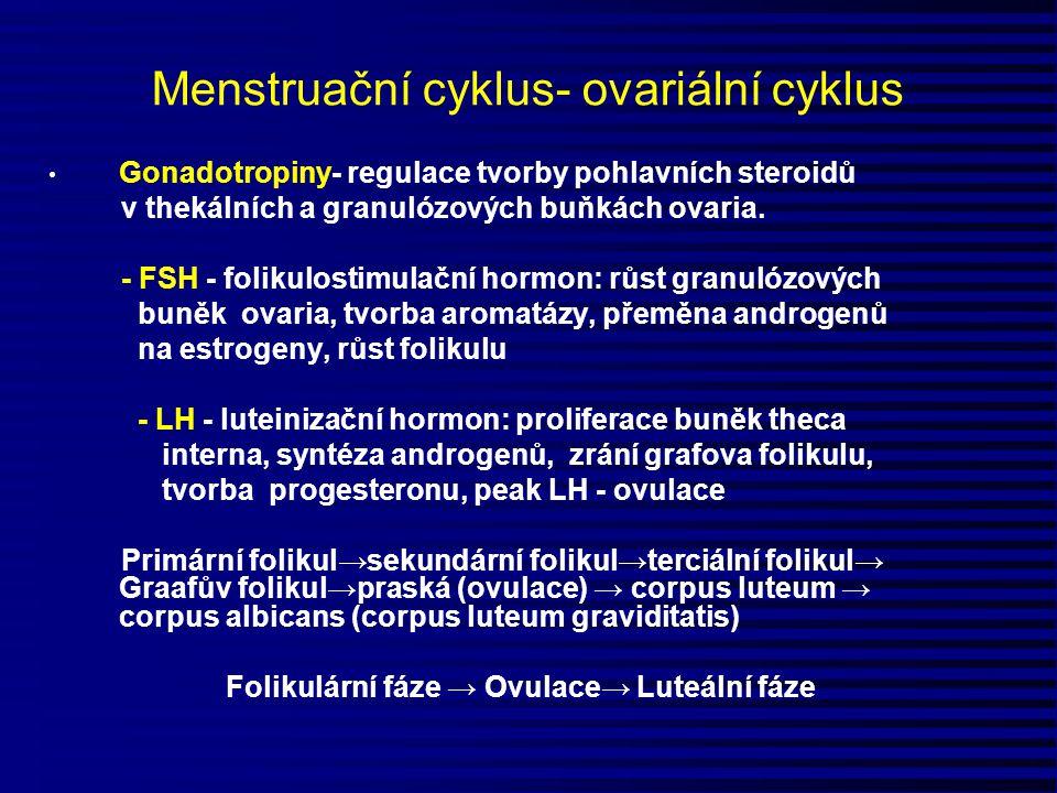 Menstruační cyklus- ovariální cyklus