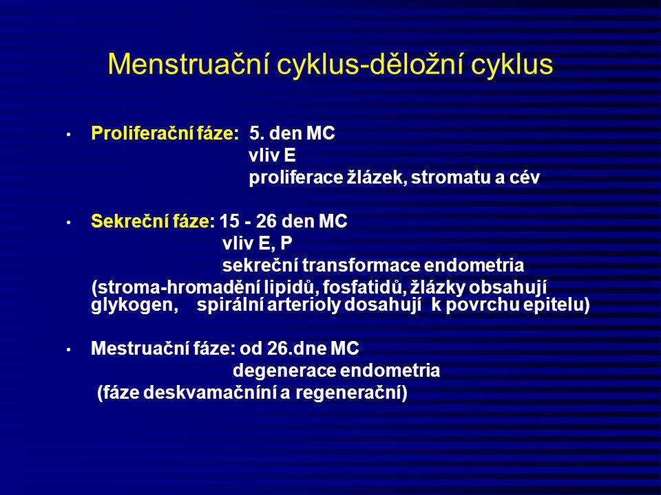 Menstruační cyklus-děložní cyklus