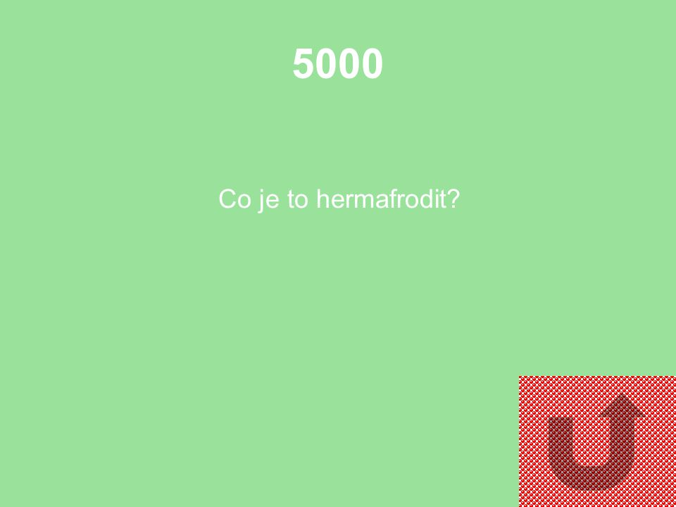 5000 Co je to hermafrodit