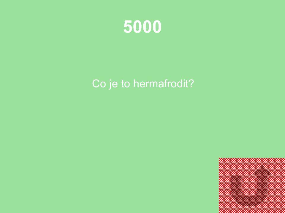 5000 Co je to hermafrodit