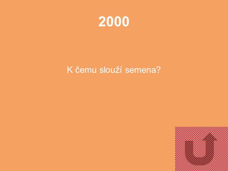 2000 K čemu slouží semena