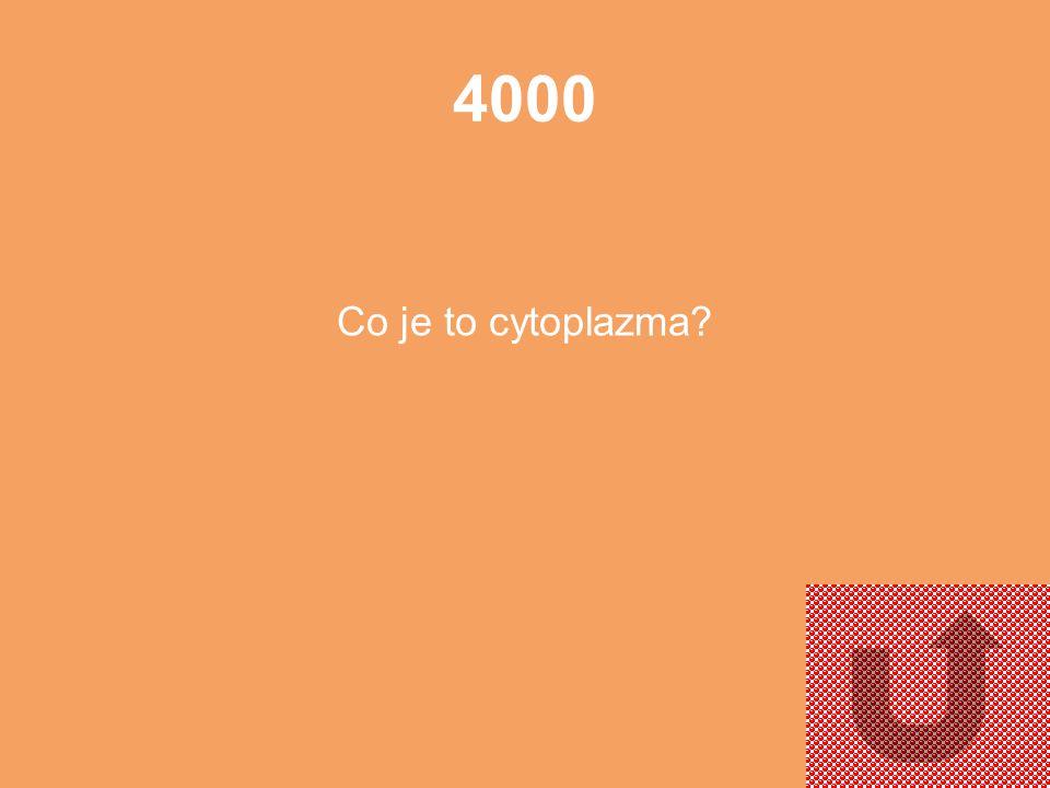 4000 Co je to cytoplazma