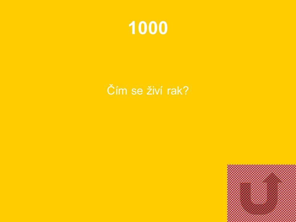 1000 Čím se živí rak