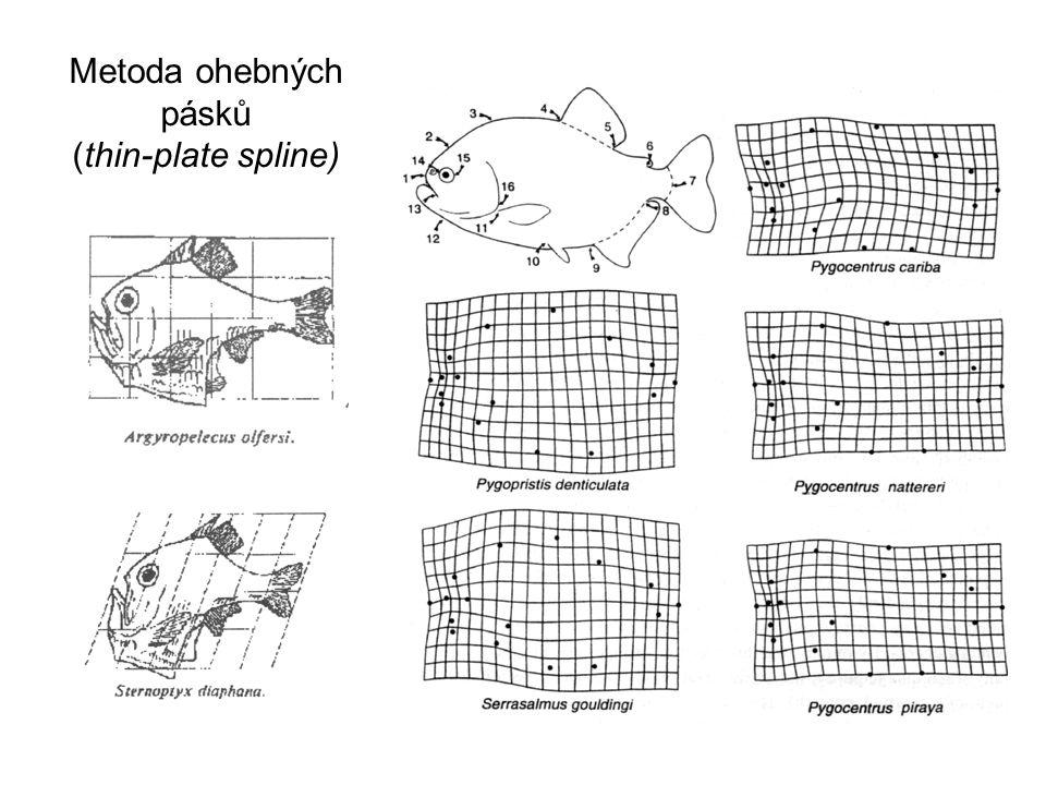 Metoda ohebných pásků (thin-plate spline)