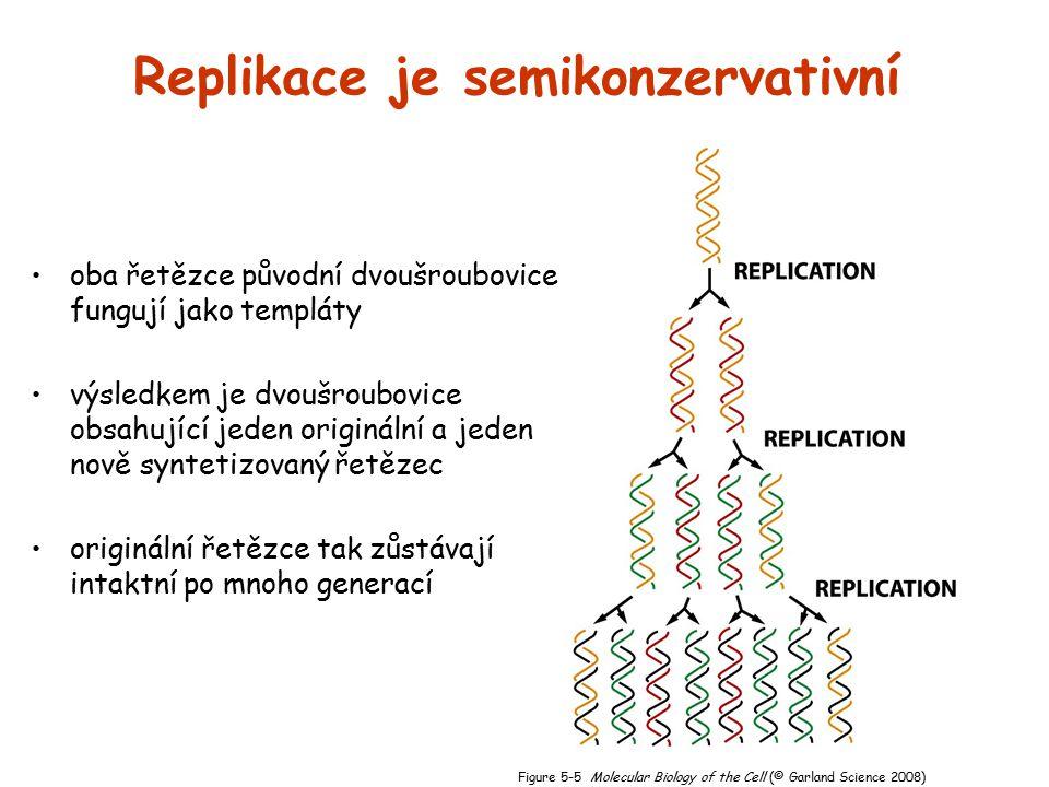 Replikace je semikonzervativní