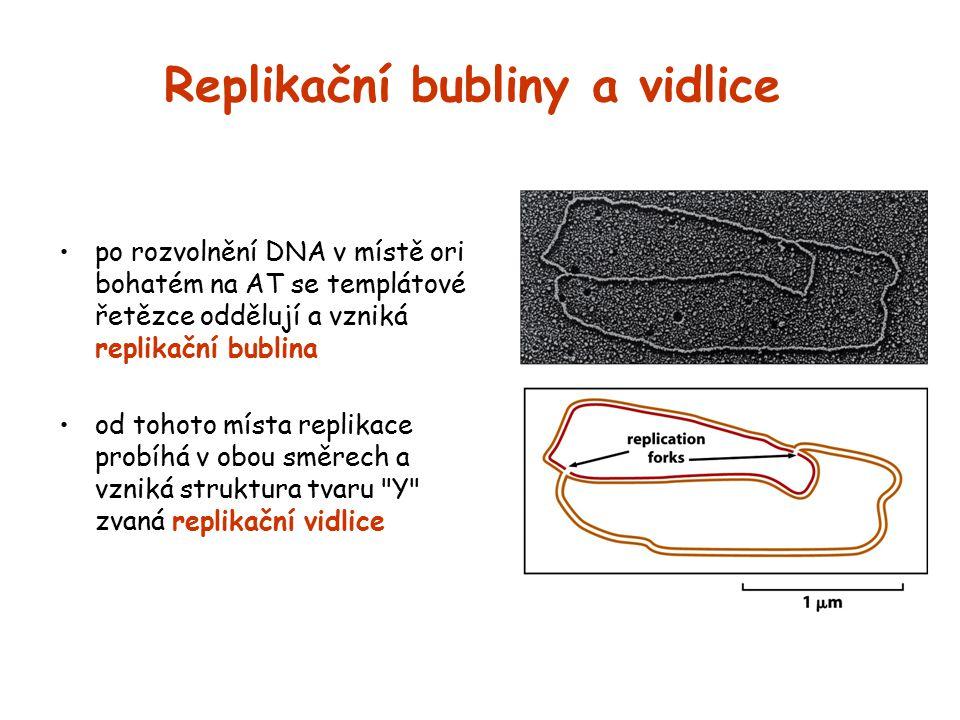 Replikační bubliny a vidlice