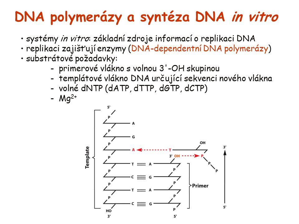 DNA polymerázy a syntéza DNA in vitro
