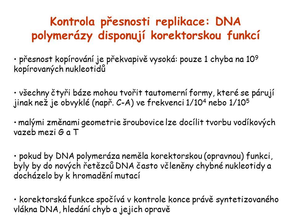 Kontrola přesnosti replikace: DNA polymerázy disponují korektorskou funkcí