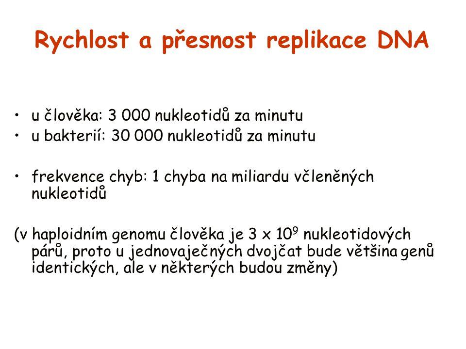 Rychlost a přesnost replikace DNA