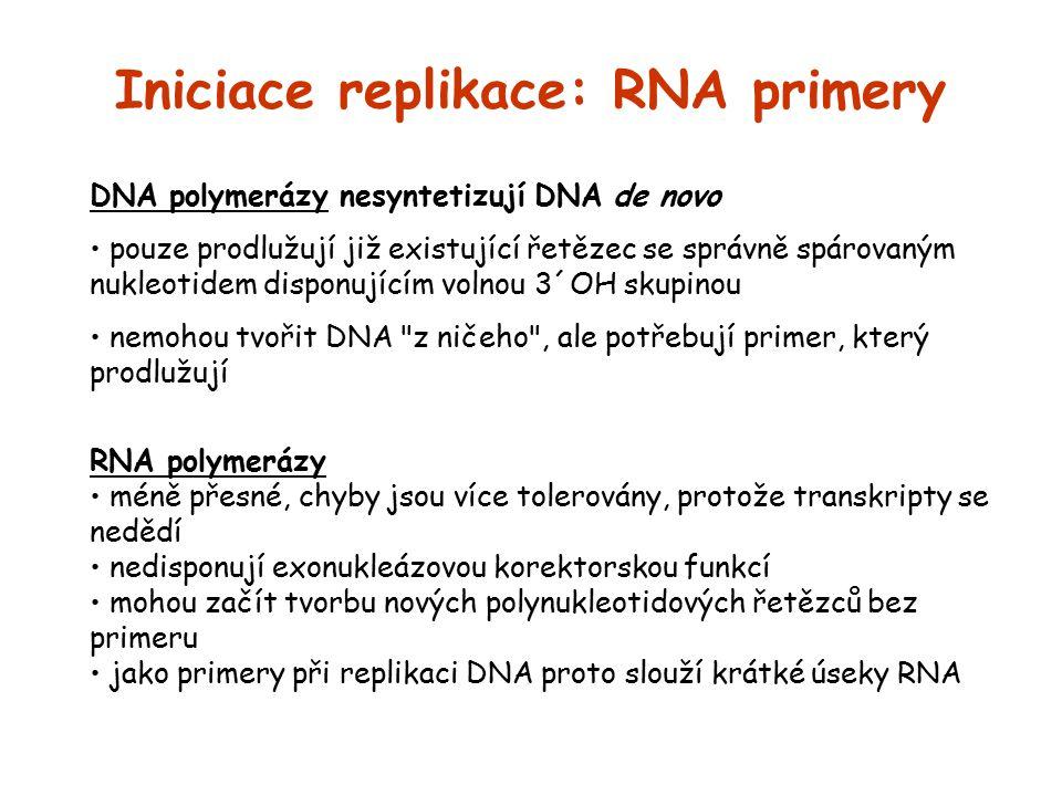 Iniciace replikace: RNA primery