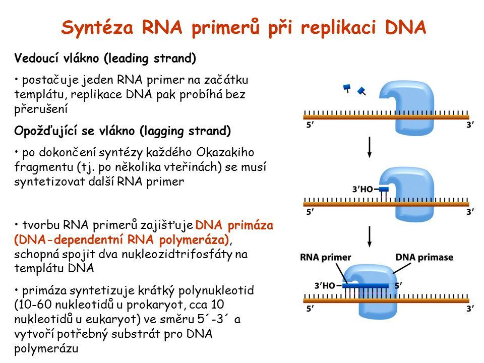 Syntéza RNA primerů při replikaci DNA