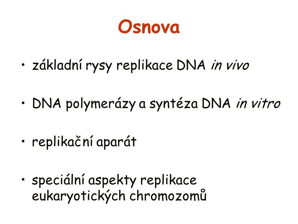 Osnova základní rysy replikace DNA in vivo
