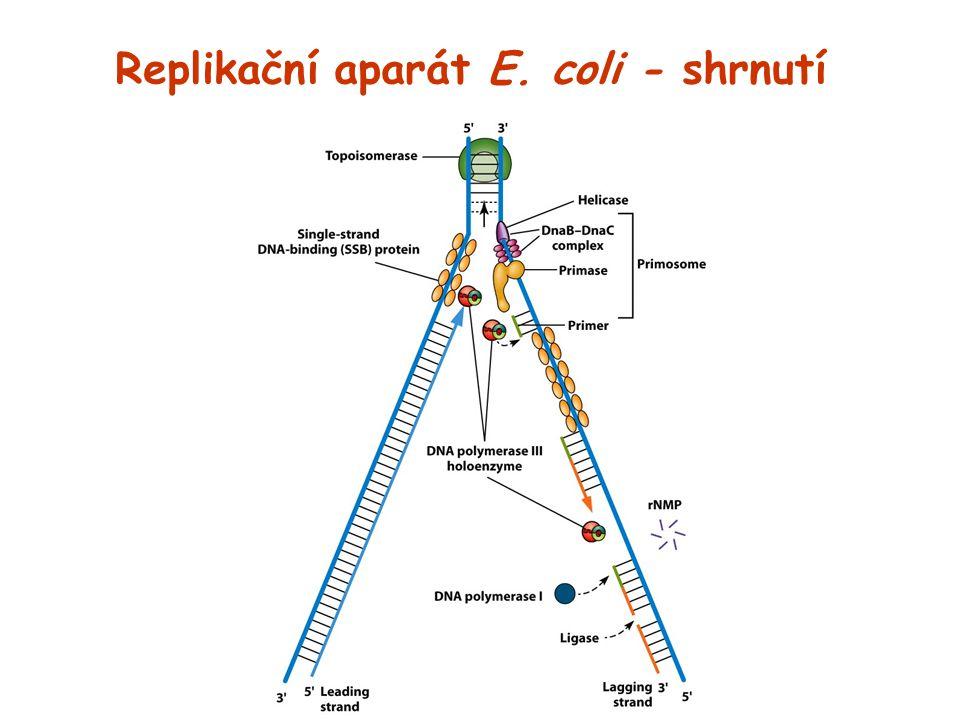 Replikační aparát E. coli - shrnutí