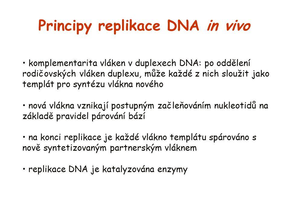 Principy replikace DNA in vivo
