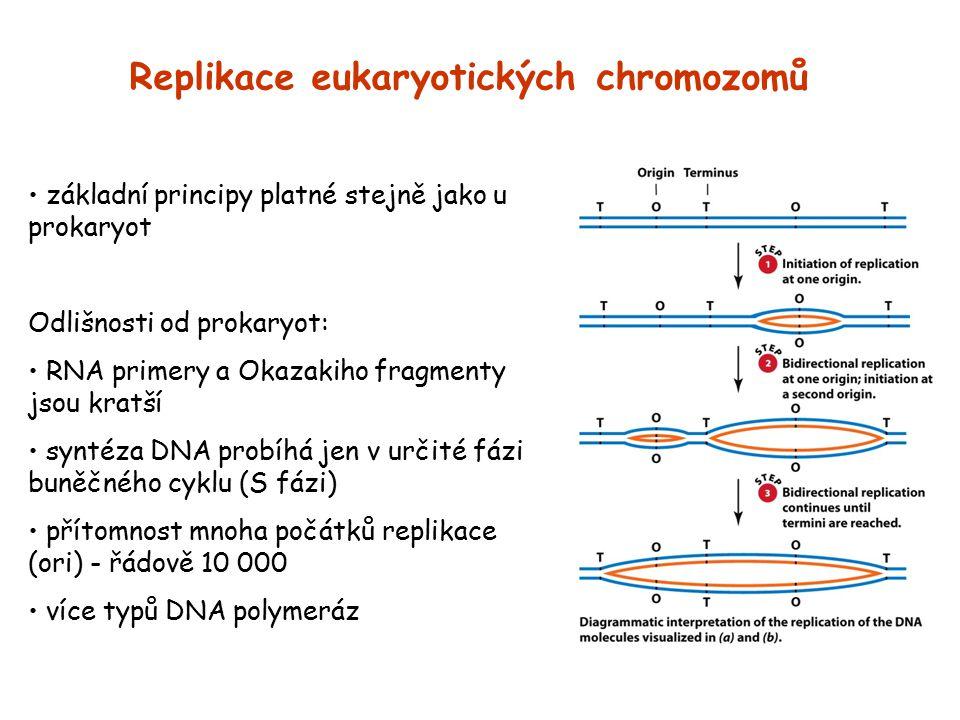 Replikace eukaryotických chromozomů