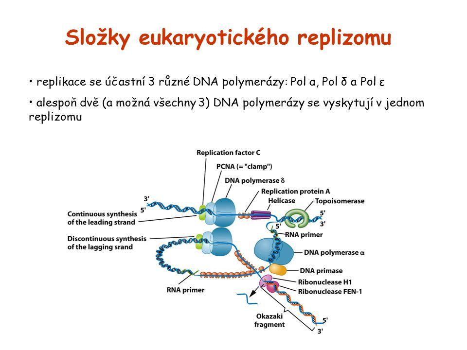 Složky eukaryotického replizomu