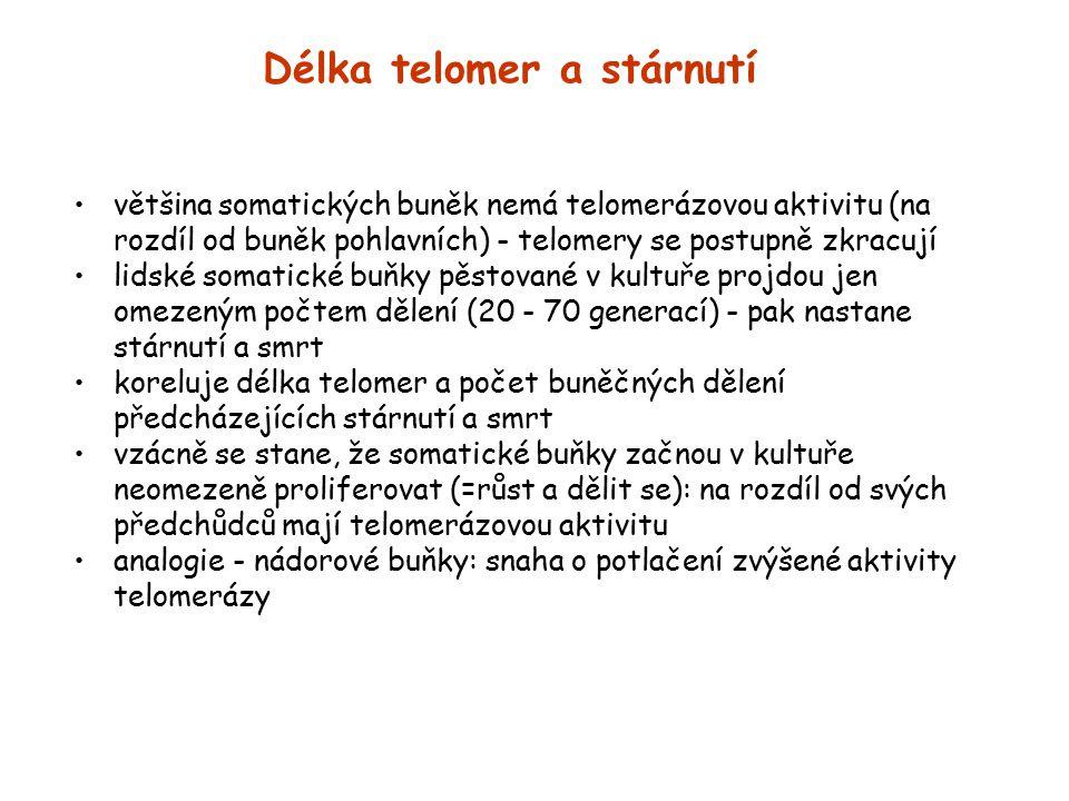 Délka telomer a stárnutí
