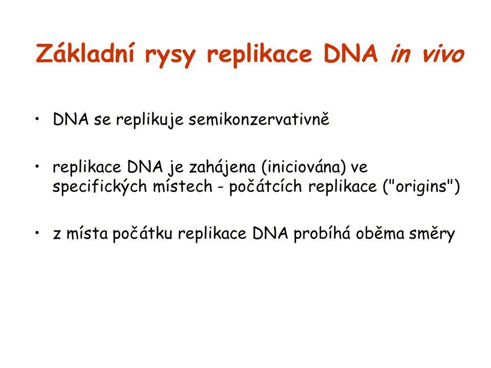 Základní rysy replikace DNA in vivo