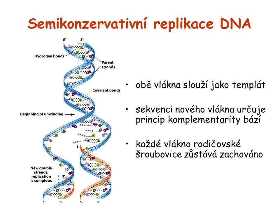 Semikonzervativní replikace DNA