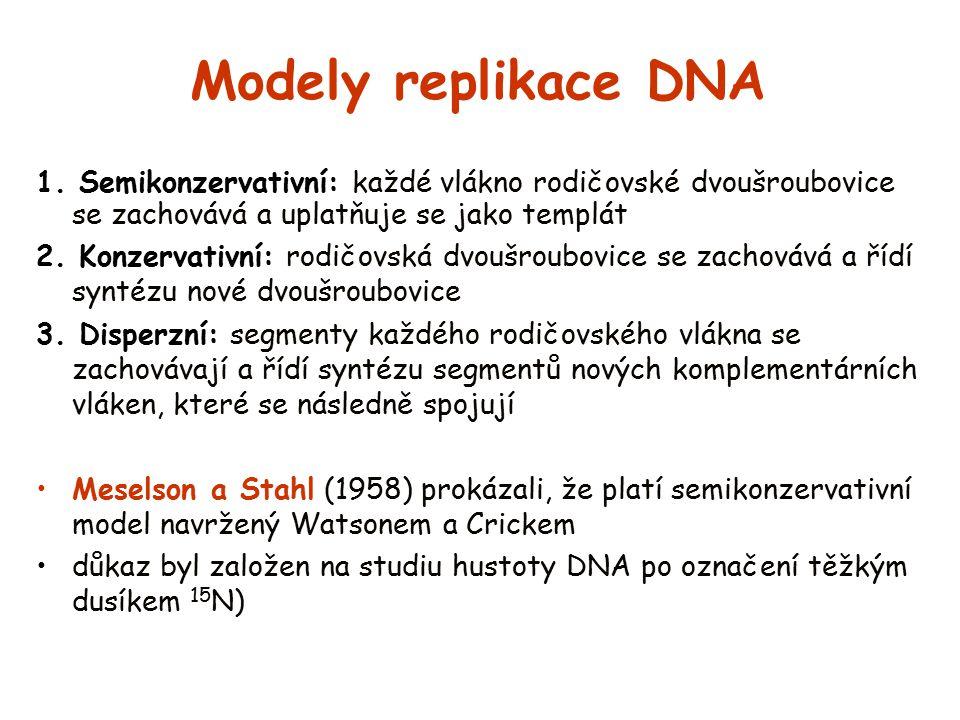 Modely replikace DNA 1. Semikonzervativní: každé vlákno rodičovské dvoušroubovice se zachovává a uplatňuje se jako templát.