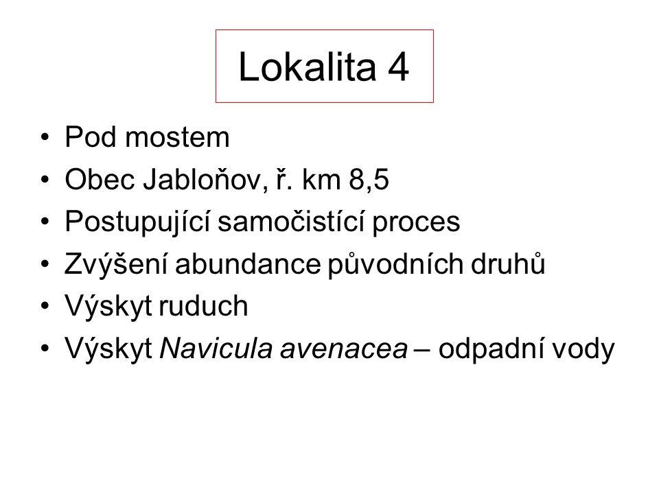 Lokalita 4 Pod mostem Obec Jabloňov, ř. km 8,5