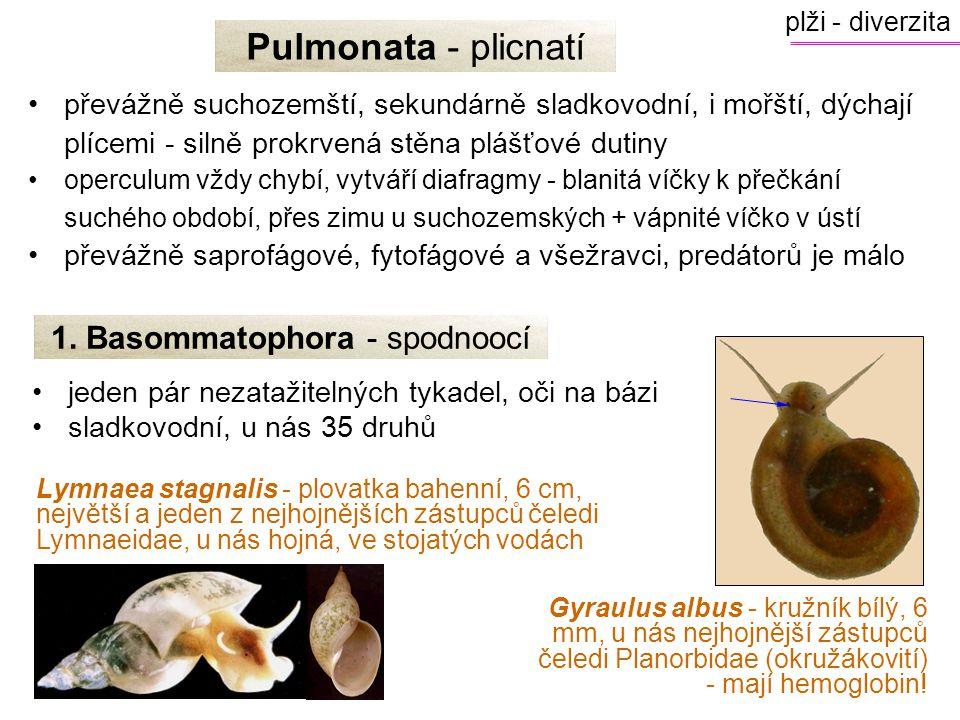 1. Basommatophora - spodnoocí