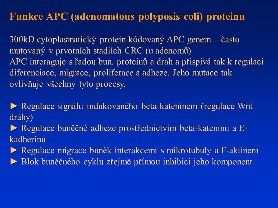 Funkce APC (adenomatous polyposis coli) proteinu