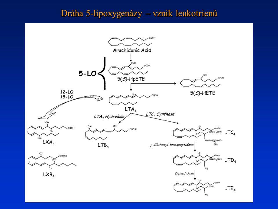 Dráha 5-lipoxygenázy – vznik leukotrienů