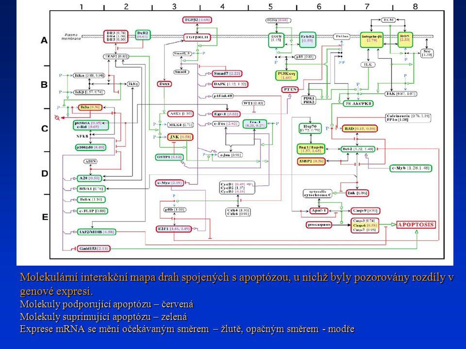 Molekulární interakční mapa drah spojených s apoptózou, u nichž byly pozorovány rozdíly v genové expresi.