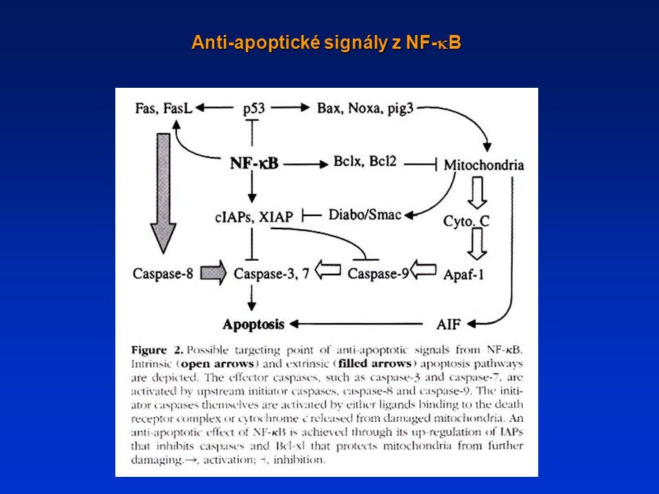 Anti-apoptické signály z NF-kB