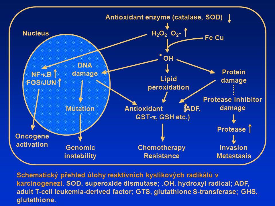 . Antioxidant enzyme (catalase, SOD) Nucleus H2O2 O2- Fe Cu OH