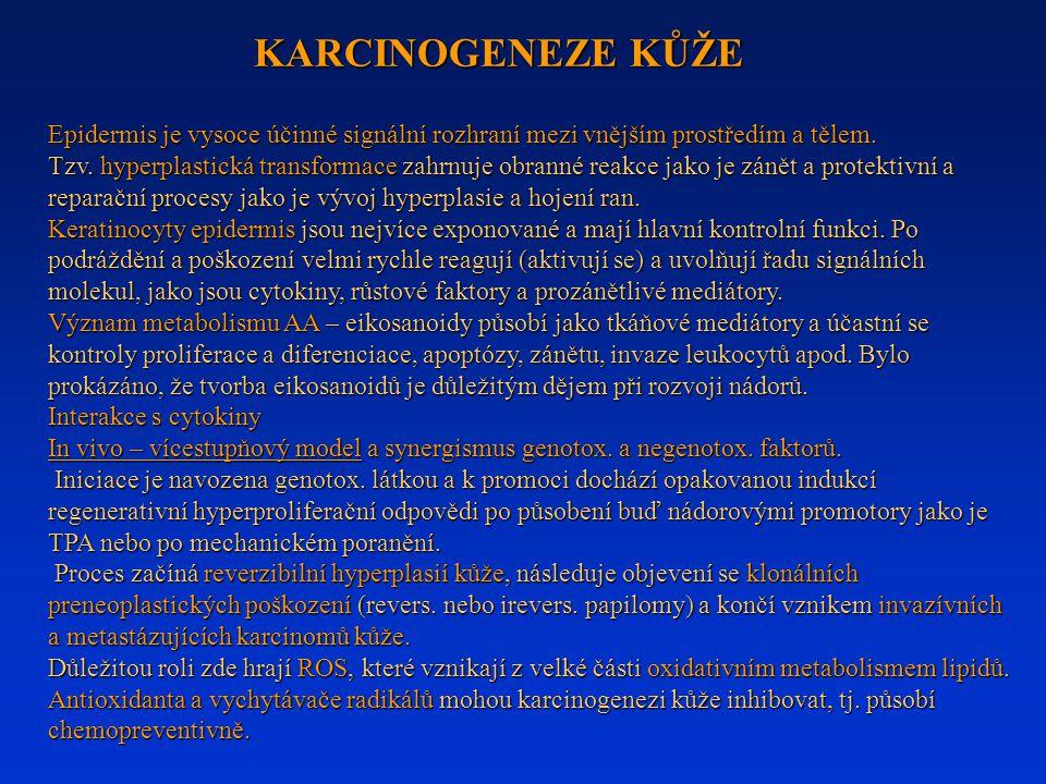 KARCINOGENEZE KŮŽE Epidermis je vysoce účinné signální rozhraní mezi vnějším prostředím a tělem.