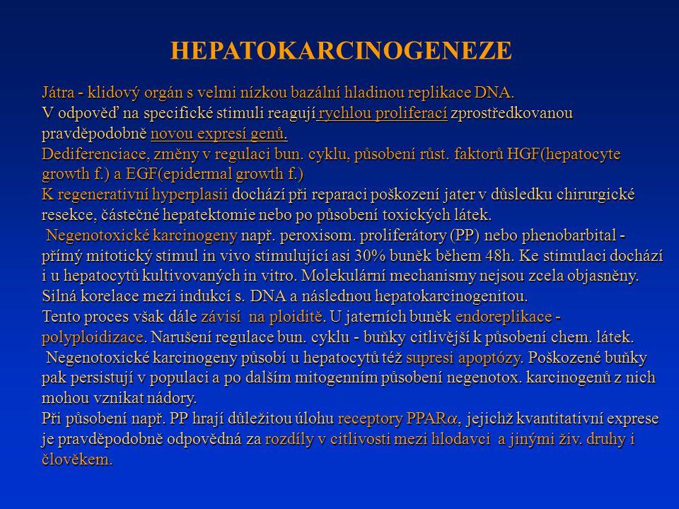 HEPATOKARCINOGENEZE Játra - klidový orgán s velmi nízkou bazální hladinou replikace DNA.