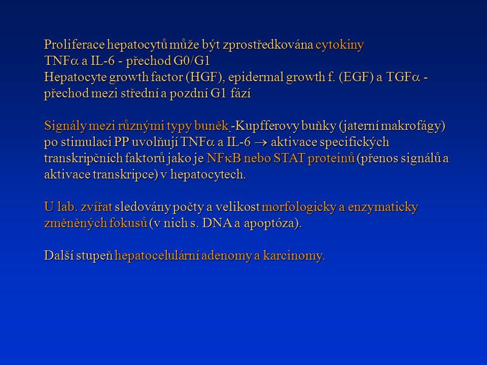 Proliferace hepatocytů může být zprostředkována cytokiny