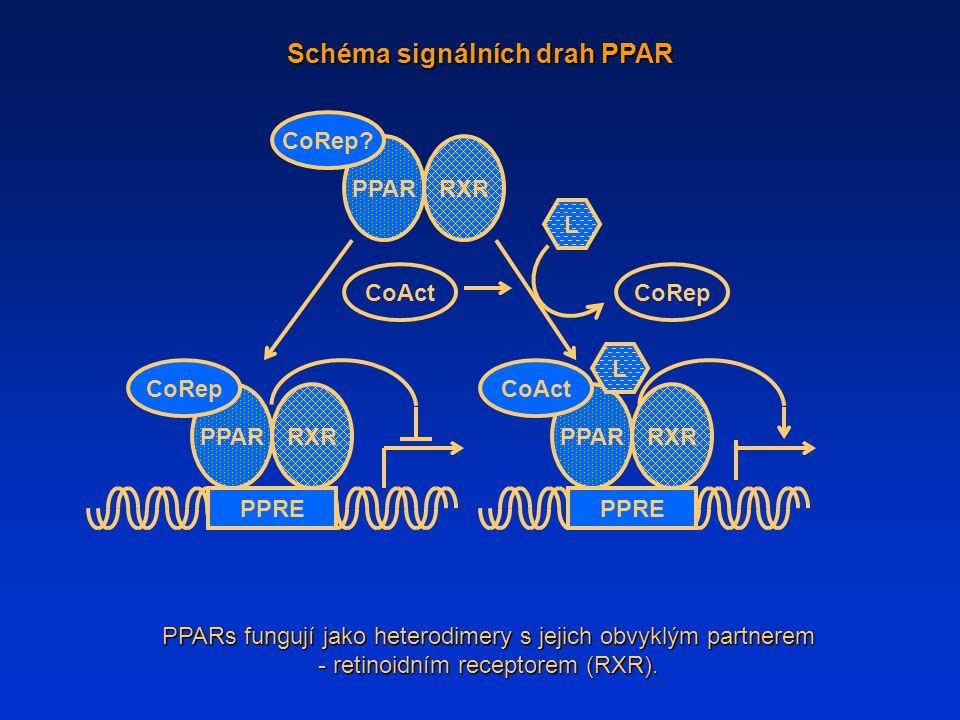 Schéma signálních drah PPAR