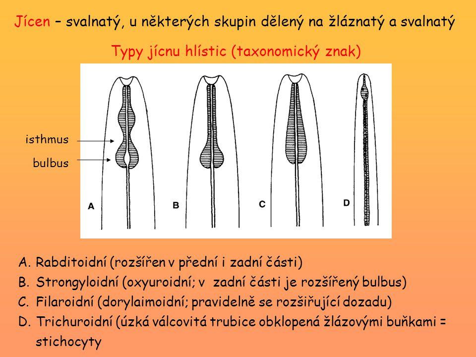 Typy jícnu hlístic (taxonomický znak)