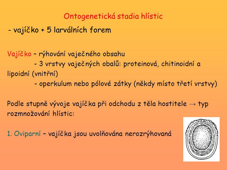 Ontogenetická stadia hlístic