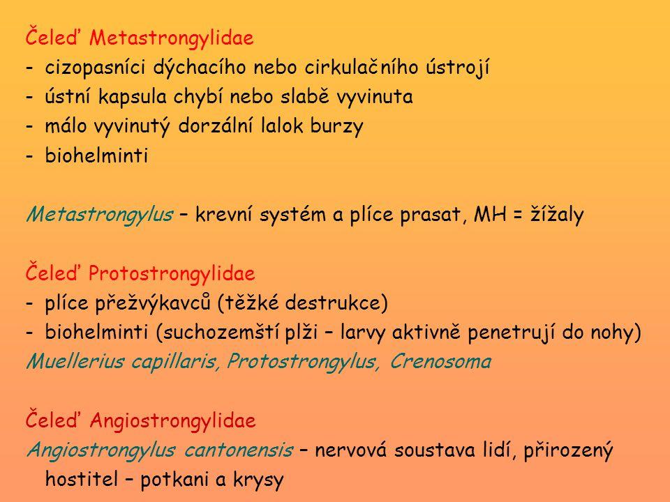 Čeleď Metastrongylidae