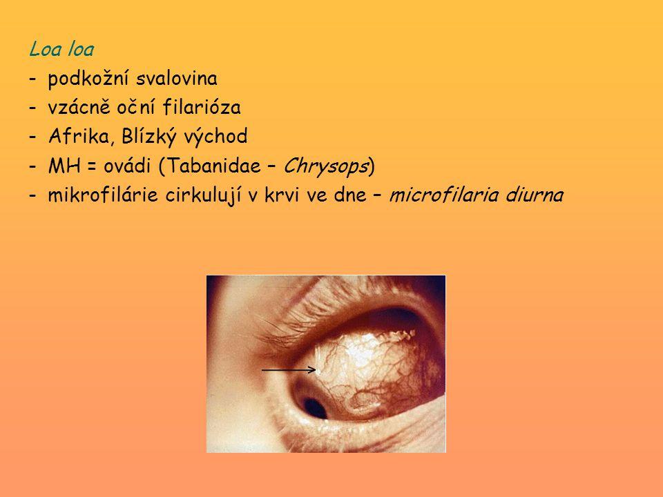 Loa loa podkožní svalovina. vzácně oční filarióza. Afrika, Blízký východ. MH = ovádi (Tabanidae – Chrysops)