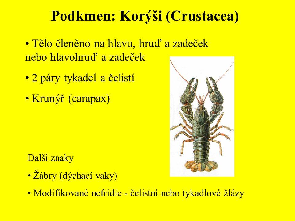 Podkmen: Korýši (Crustacea)