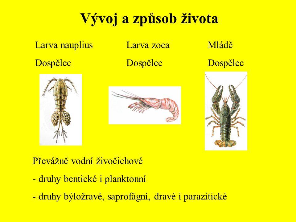Vývoj a způsob života Larva nauplius Dospělec Larva zoea Dospělec