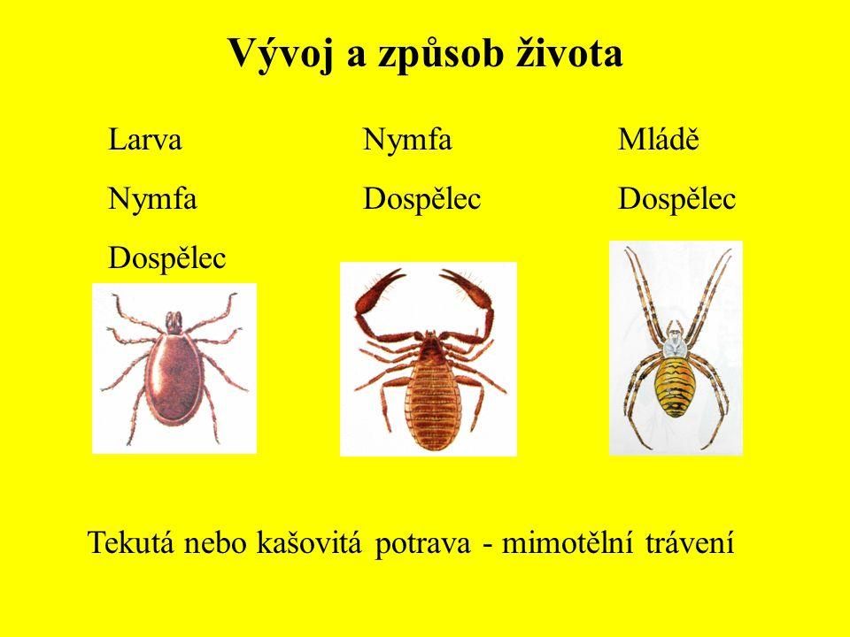 Vývoj a způsob života Larva Nymfa Dospělec Nymfa Dospělec Mládě