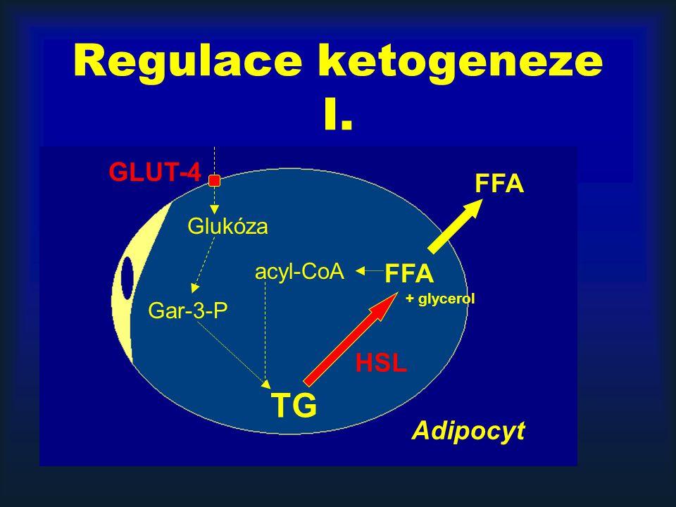 Regulace ketogeneze I. TG GLUT-4 FFA FFA HSL Adipocyt Glukóza acyl-CoA