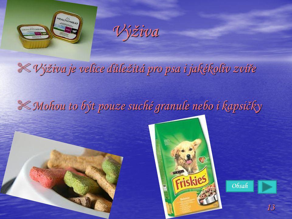 Výživa Výživa je velice důležitá pro psa i jakékoliv zvíře