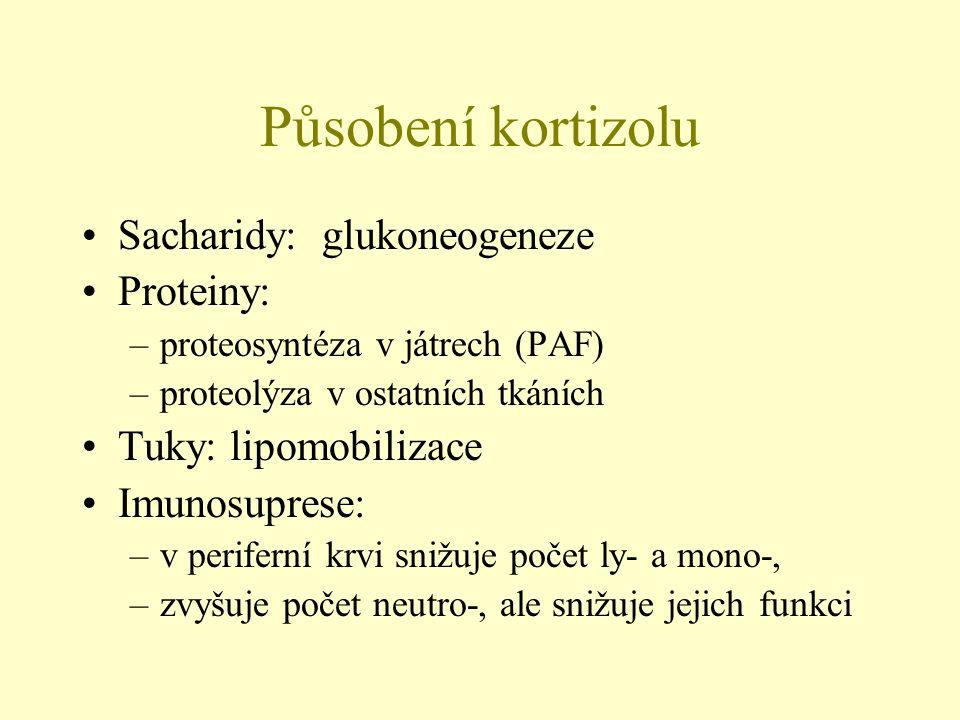 Působení kortizolu Sacharidy: glukoneogeneze Proteiny: