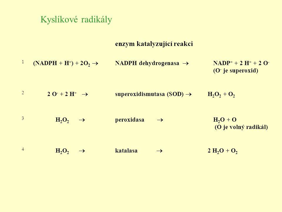 Kyslíkové radikály enzym katalyzující reakci (NADPH + H+) + 2O2 
