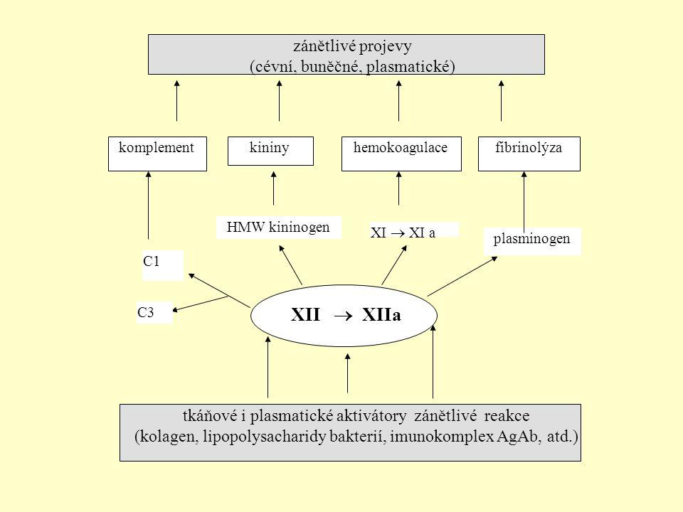 XII  XIIa zánětlivé projevy (cévní, buněčné, plasmatické)