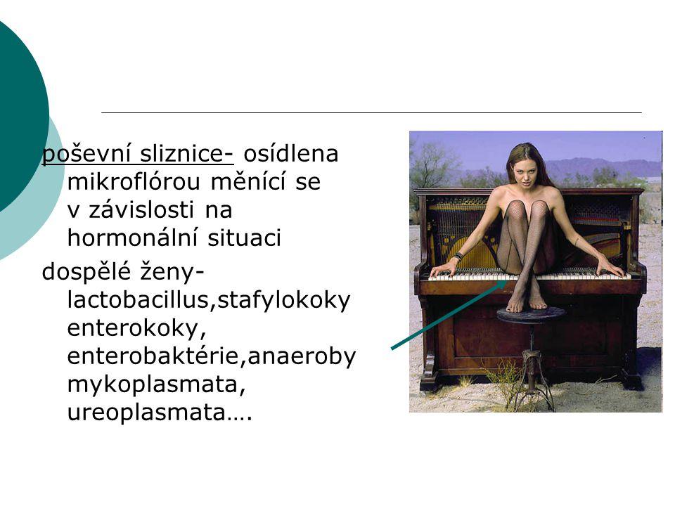 poševní sliznice- osídlena mikroflórou měnící se v závislosti na hormonální situaci