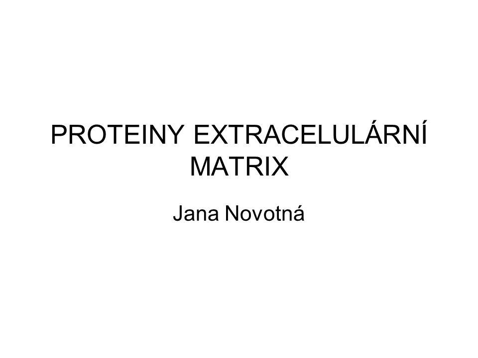 PROTEINY EXTRACELULÁRNÍ MATRIX