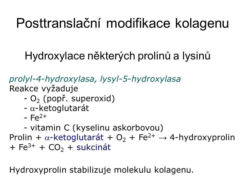 Posttranslační modifikace kolagenu